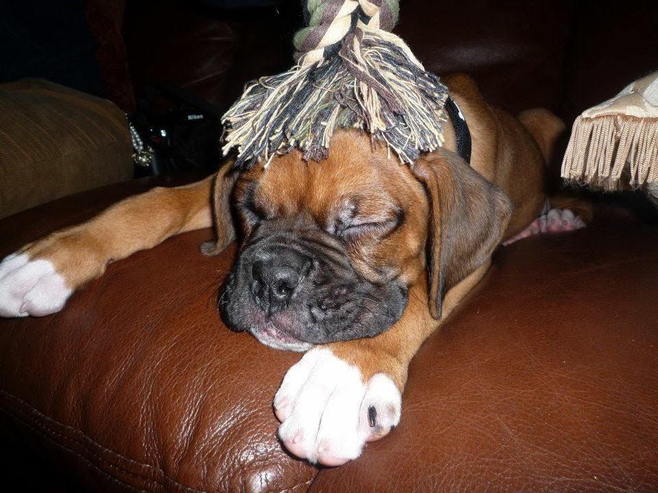 犬が寝ている様子