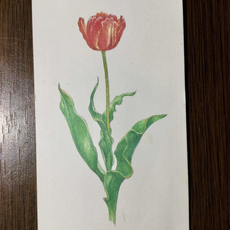 1輪のバラの花の写真です。