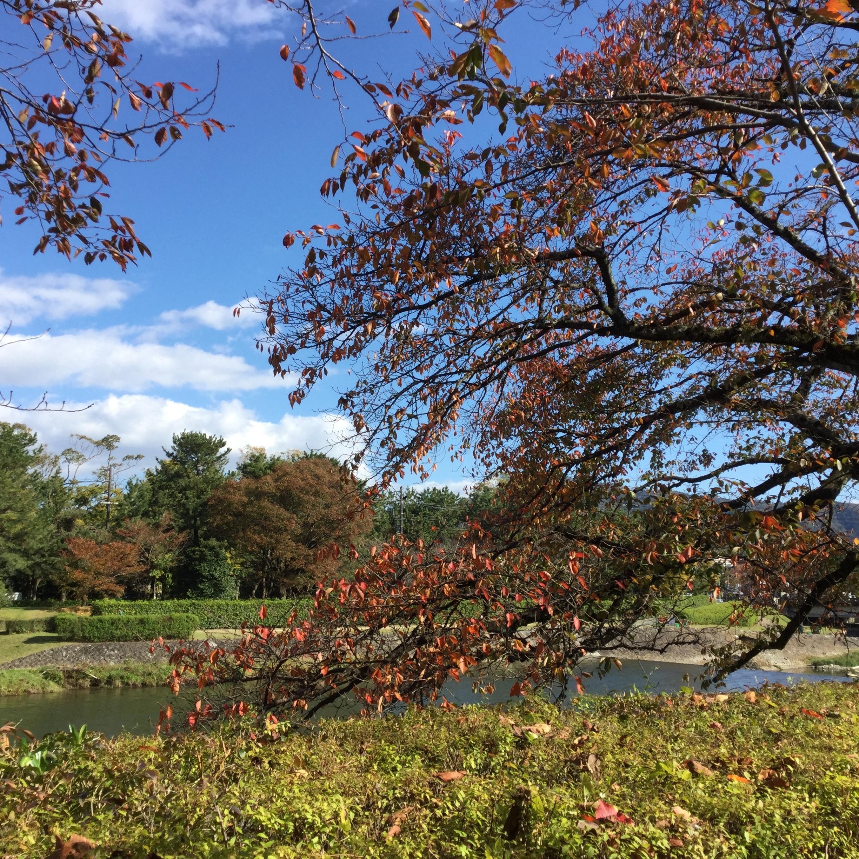 紅葉と川の写真です。