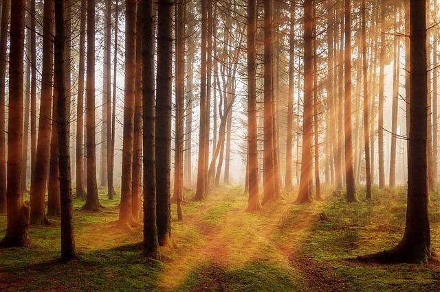 光がさす森の写真です。