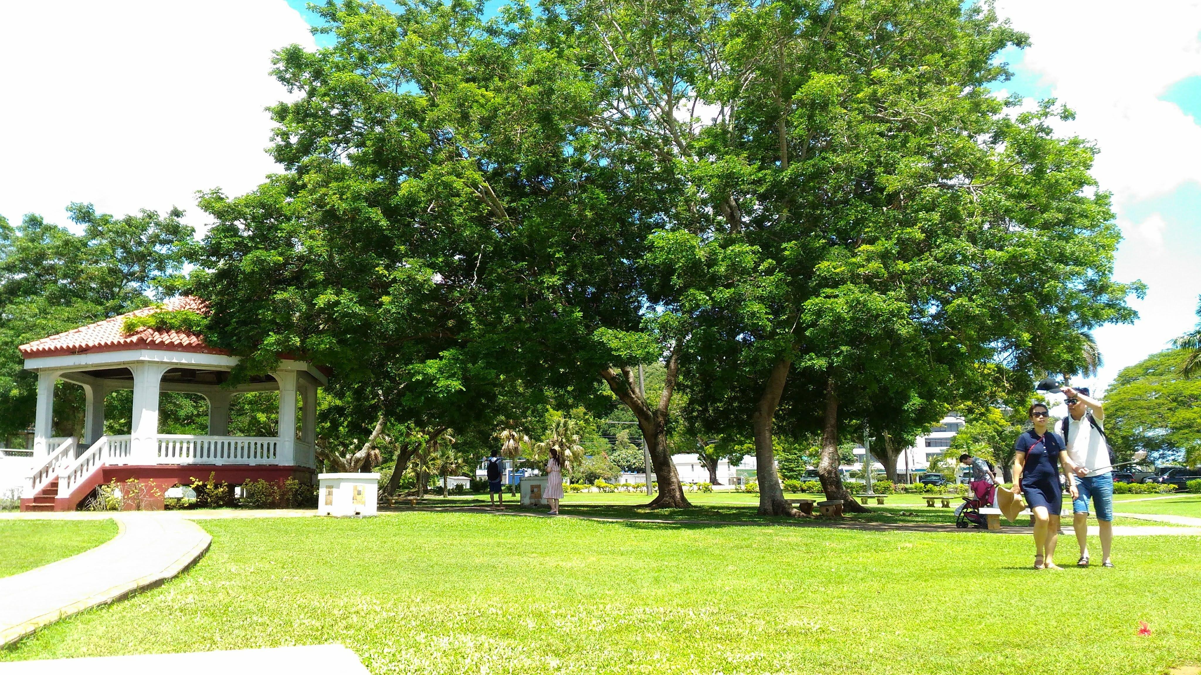 大きな木と芝生の写真