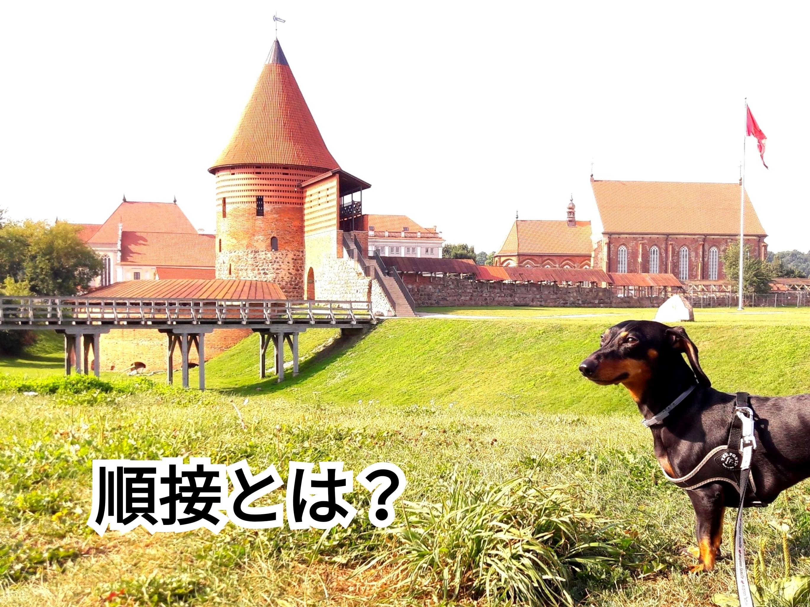 犬の写真に「順接とは?」という単語を入れた画像です