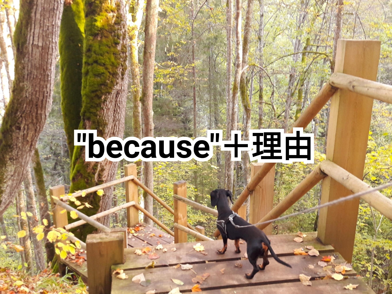 """犬の写真に""""because+理由""""という文字を入れた画像です"""