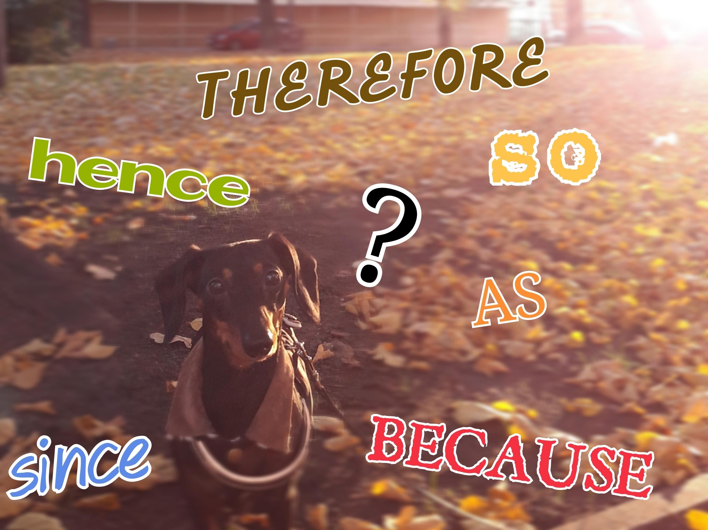 犬の写真に順接の単語を書いた画像です