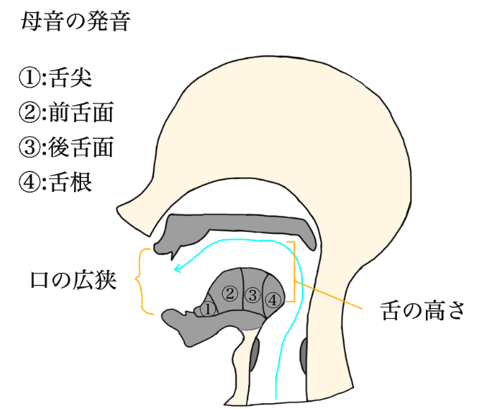 母音の発音説明図(自作)