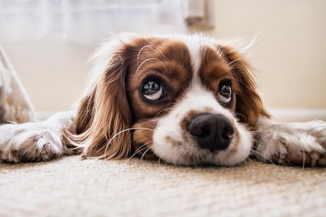 子犬のイメージです