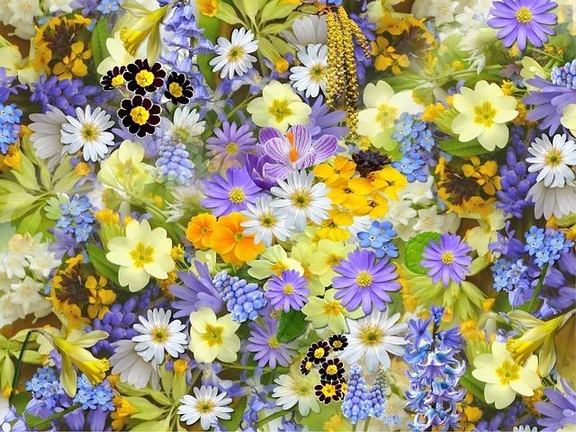 美しい花がたくさんあります。