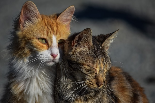 寄り添う二匹の猫