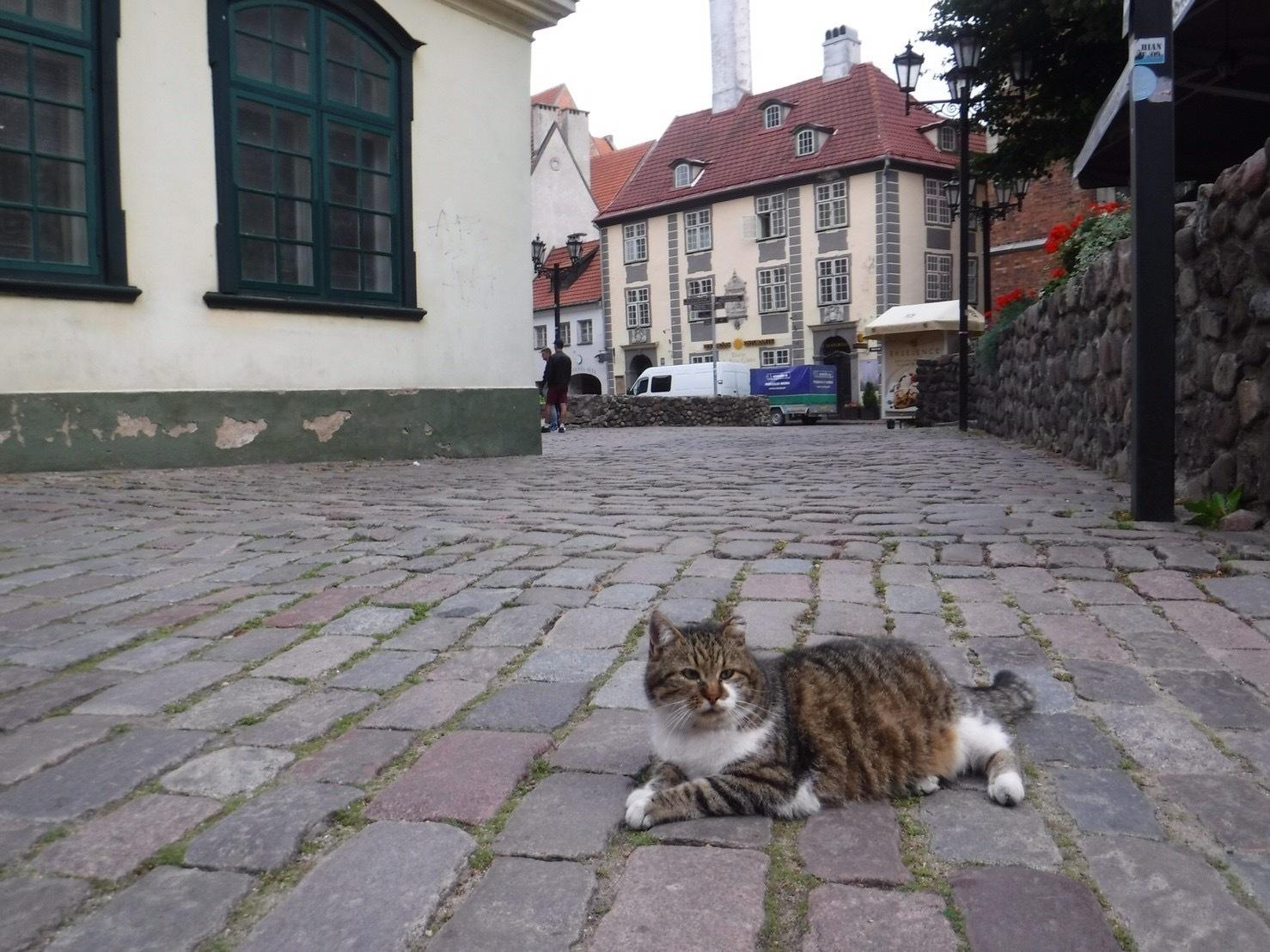 ヨーロッパの路上でくつろぐ猫の写真