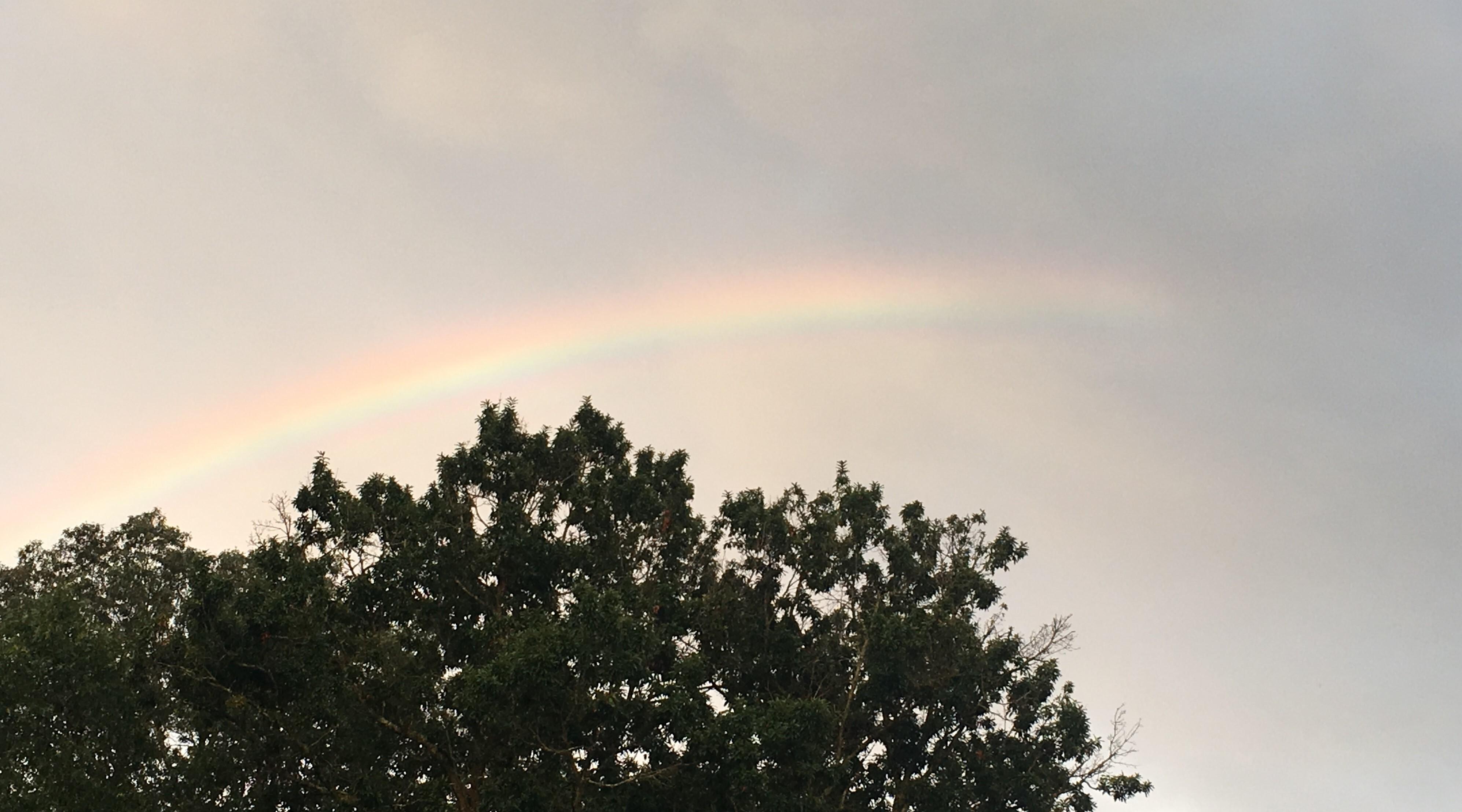 感動するきれいな虹