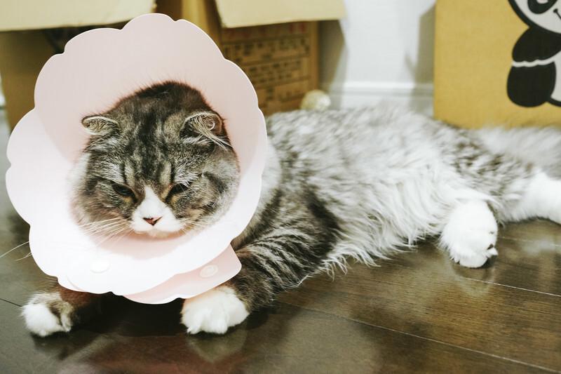 気分が乗らない猫