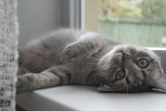 怠けている猫