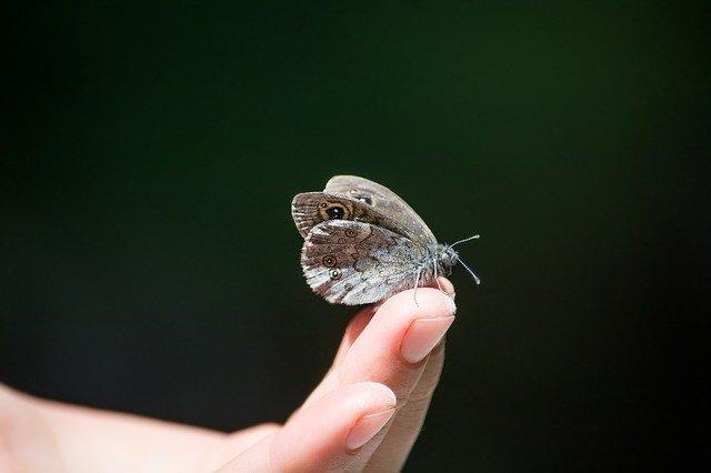 指先にとまる蝶々