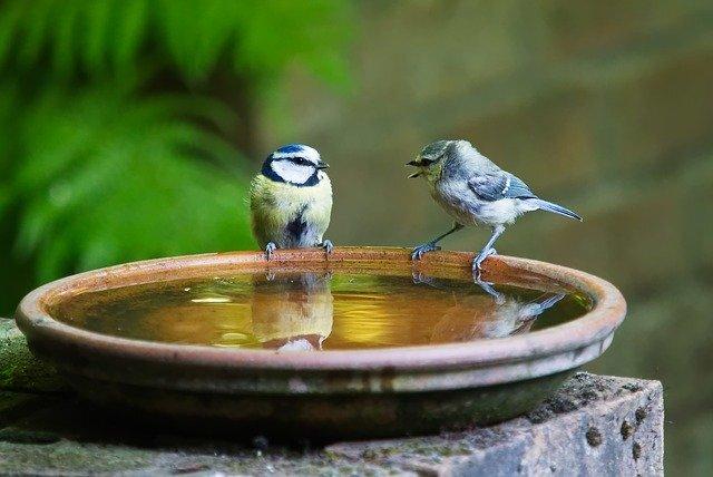 向き合っている小鳥