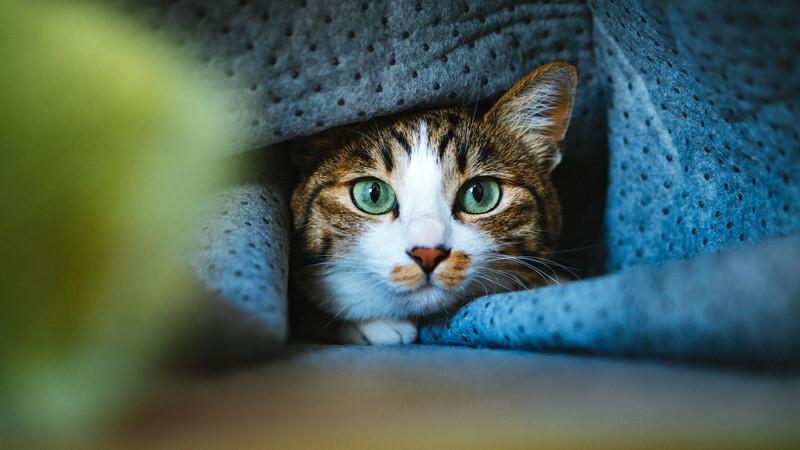 布にくるまった猫