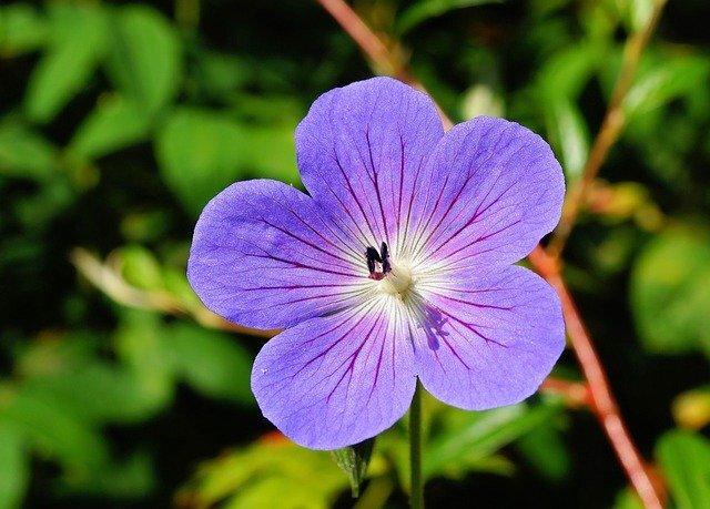 一輪の青い花の写真